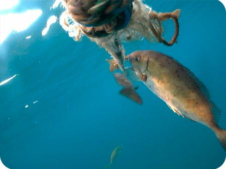 養殖ワカメの食害状況調査