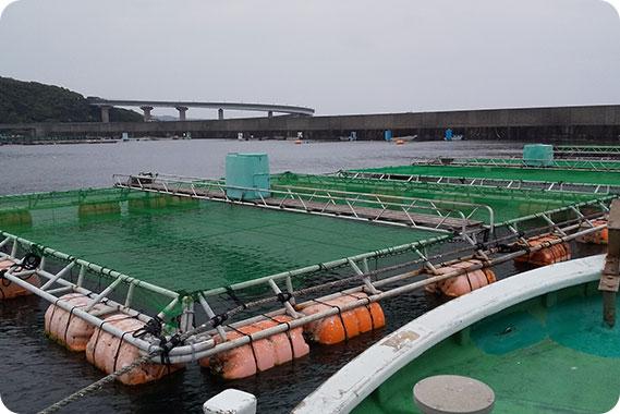 水中映像のストリーミング配信で養殖筏内の様子を探る